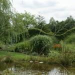 Teich mit Dirndlstrauchhecken im Hintergrund
